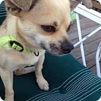 Adopt A Pet :: Fenic - Cumberland, MD