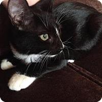 Adopt A Pet :: Molly - East Hanover, NJ
