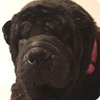 Adopt A Pet :: Mia - Barnegat Light, NJ