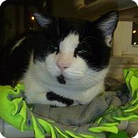 Adopt A Pet :: Bobby - Hamburg, NY
