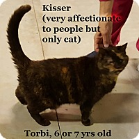 Adopt A Pet :: Kisser - Bentonville, AR