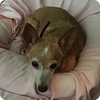 Adopt A Pet :: Wilbur - San Marcos, CA