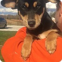 Adopt A Pet :: Carla - Medora, IN