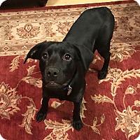 Adopt A Pet :: Delilah - PORTLAND, ME