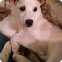 Adopt A Pet :: Trix - Greensboro, GA