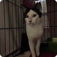 Adopt A Pet :: Sweet Boy - Honolulu, HI