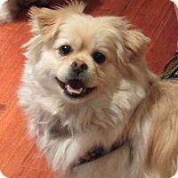 Adopt A Pet :: Macy - Jacksonville, FL