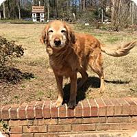 Adopt A Pet :: Cooper IV - BIRMINGHAM, AL