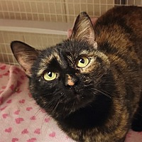 Adopt A Pet :: Colleen - Grayslake, IL