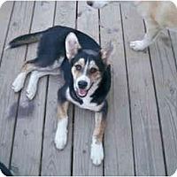 Adopt A Pet :: Lil Mo - Jacksonville, NC