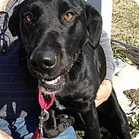 Adopt A Pet :: Callao - Richmond, VA