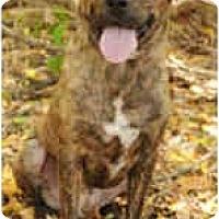 Adopt A Pet :: Eli - Chicago, IL