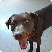 Adopt A Pet :: Bella Dawn - Beaver, UT