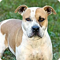 Adopt A Pet :: Rufus - Cashiers, NC