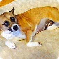 Adopt A Pet :: Vanna - Poughkeepsie, NY