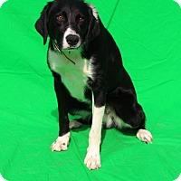 Adopt A Pet :: Valor - Thomasville, NC