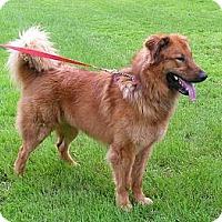 Adopt A Pet :: Samson - Rigaud, QC