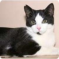 Adopt A Pet :: Felix - Arlington, VA