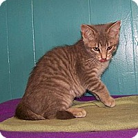 Adopt A Pet :: Adeline - Dover, OH