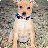 Adopt A Pet :: Singi - Haverhill, MA