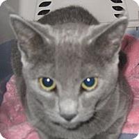 Adopt A Pet :: Lulu - Dallas, TX