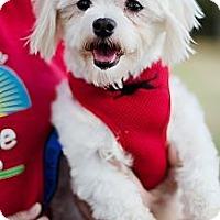 Adopt A Pet :: Olive - Sherman Oaks, CA