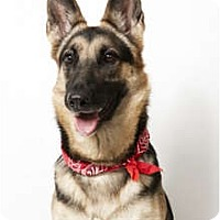 Adopt A Pet :: Nancy - New York, NY