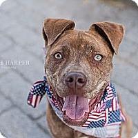 Adopt A Pet :: Tigger - Reisterstown, MD