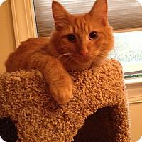 Adopt A Pet :: Saturn & Jupiter - Arlington, VA