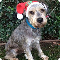 Adopt A Pet :: WINSTON - Irvine, CA