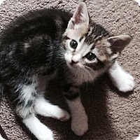 Adopt A Pet :: Taryn - Edmonton, AB
