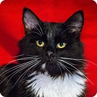 Adopt A Pet :: Huggles - Calgary, AB