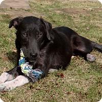 Adopt A Pet :: Hannah - Knoxville, TN
