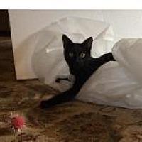 Adopt A Pet :: Mowgli - Santa Cruz, CA