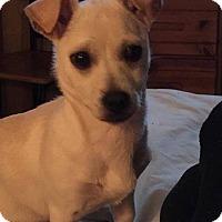 Adopt A Pet :: Billy # 1027 - Nixa, MO