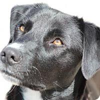 Adopt A Pet :: Sally - Lander, WY