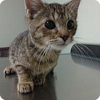 Adopt A Pet :: Flay - Monroe, GA