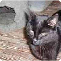 Adopt A Pet :: Stephanie - North Boston, NY