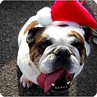 Adopt A Pet :: Sedona*adoption pending* - Gilbert, AZ
