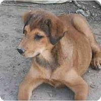 Adopt A Pet :: Destiny - Albany, NY