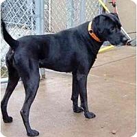 Adopt A Pet :: Judd - Little Rock, AR