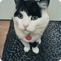 Adopt A Pet :: Judd - Vancouver, BC