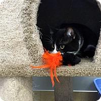 Adopt A Pet :: Louis - Deerfield Beach, FL