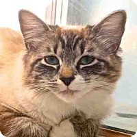 Adopt A Pet :: Honey Bun - Davis, CA