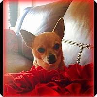 Adopt A Pet :: Peanut - Indian Trail, NC