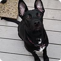 Adopt A Pet :: Janet - Millersville, MD