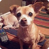 Adopt A Pet :: Lily - Brooksville, FL