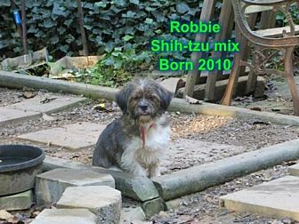 Shih Tzu Mix Dog for adoption in Huddleston, Virginia - Robbie