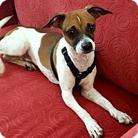 Adopt A Pet :: Sprocket - Fresno, CA