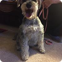 Adopt A Pet :: Vandy-Pending Adoption - Laurel, MD